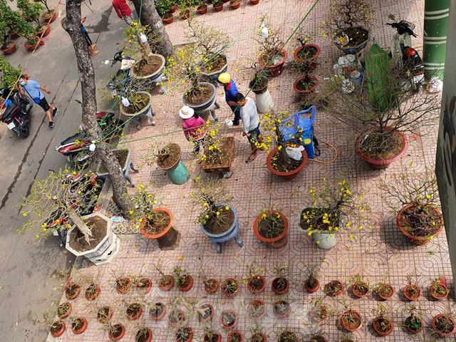 Bonsai mini độc lạ tiền triệu hút khách tại chợ hoa Tết - Ảnh 12.
