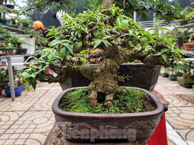 Bonsai mini độc lạ tiền triệu hút khách tại chợ hoa Tết - Ảnh 8.