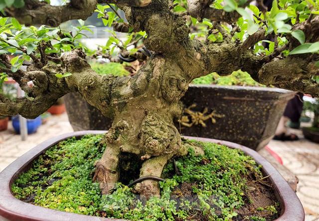 Bonsai mini độc lạ tiền triệu hút khách tại chợ hoa Tết - Ảnh 9.