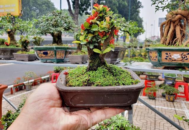 Bonsai mini độc lạ tiền triệu hút khách tại chợ hoa Tết - Ảnh 10.