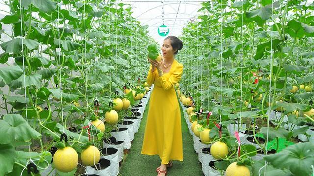 Vườn dưa lưới của chàng thạc sĩ nông nghiệp thu hút đông bạn trẻ check-in dịp Tết - Ảnh 2.