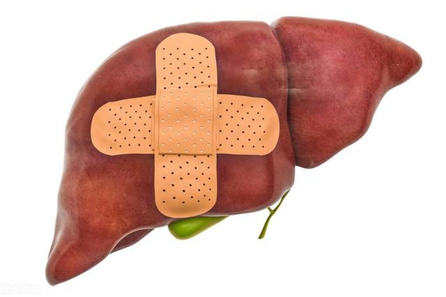 Gan thích 8 loại thức ăn này, mỗi ngày ăn một chút chức năng gan sẽ khỏe dần lên - Ảnh 1.