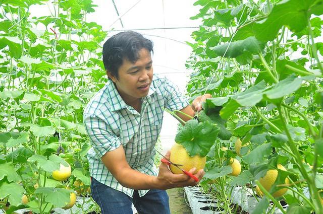 Vườn dưa lưới của chàng thạc sĩ nông nghiệp thu hút đông bạn trẻ check-in dịp Tết - Ảnh 11.