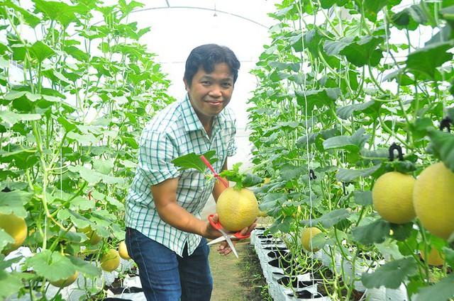 Vườn dưa lưới của chàng thạc sĩ nông nghiệp thu hút đông bạn trẻ check-in dịp Tết - Ảnh 12.