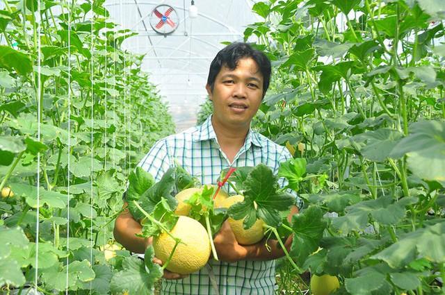 Vườn dưa lưới của chàng thạc sĩ nông nghiệp thu hút đông bạn trẻ check-in dịp Tết - Ảnh 14.