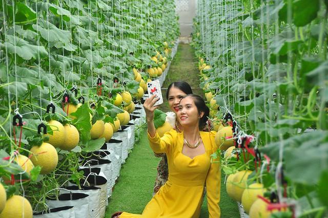 Vườn dưa lưới của chàng thạc sĩ nông nghiệp thu hút đông bạn trẻ check-in dịp Tết - Ảnh 4.