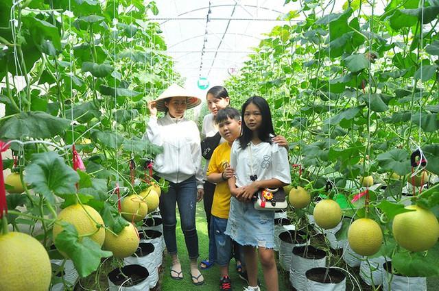 Vườn dưa lưới của chàng thạc sĩ nông nghiệp thu hút đông bạn trẻ check-in dịp Tết - Ảnh 5.