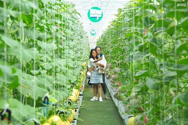 Vườn dưa lưới của chàng thạc sĩ nông nghiệp thu hút đông bạn trẻ check-in dịp Tết - Ảnh 9.