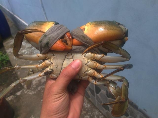 Ngày Tết, cua biển ngon nhất miền Tây giá 1 triệu đồng/kg - Ảnh 8.