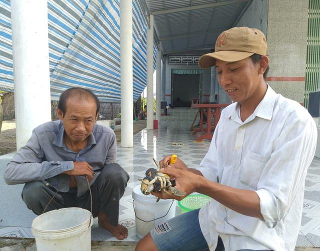 Ngày Tết, cua biển ngon nhất miền Tây giá 1 triệu đồng/kg - Ảnh 10.