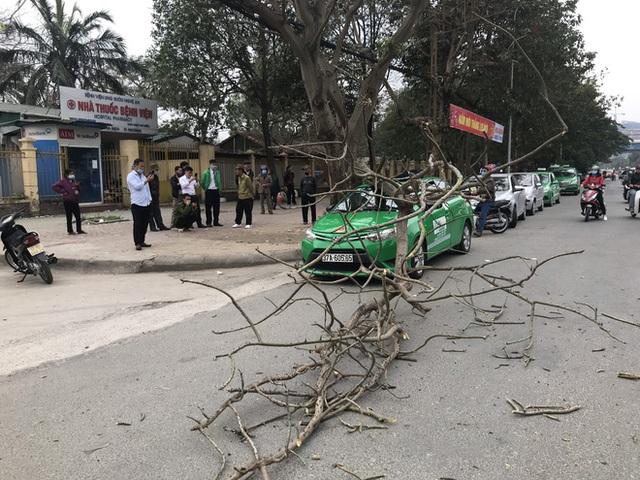 Nam tài xế và khách thoát chết khi vừa ra khỏi cửa thì cây đổ, đè bẹp xe taxi - Ảnh 1.