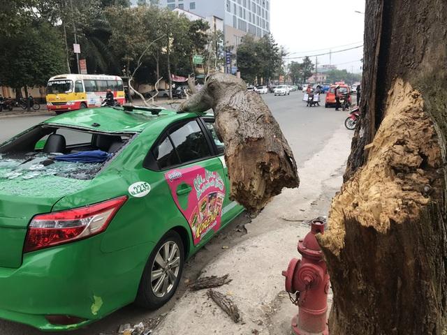 Nam tài xế và khách thoát chết khi vừa ra khỏi cửa thì cây đổ, đè bẹp xe taxi - Ảnh 2.