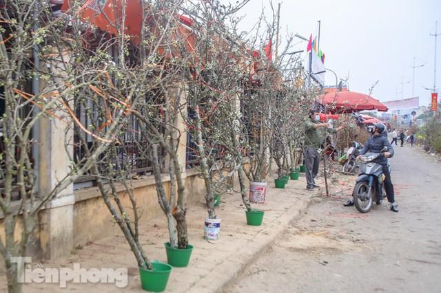 Người dân Hà Thành bỏ tiền triệu mua hoa lê chơi sau Tết - Ảnh 11.