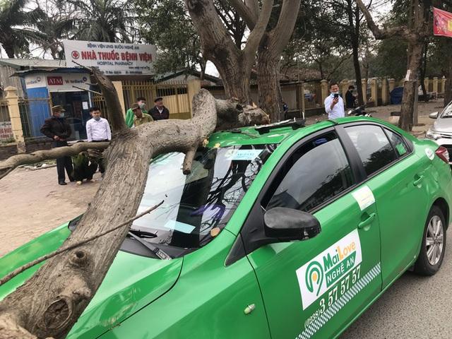 Nam tài xế và khách thoát chết khi vừa ra khỏi cửa thì cây đổ, đè bẹp xe taxi - Ảnh 3.