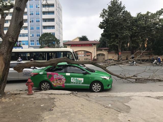 Nam tài xế và khách thoát chết khi vừa ra khỏi cửa thì cây đổ, đè bẹp xe taxi - Ảnh 4.