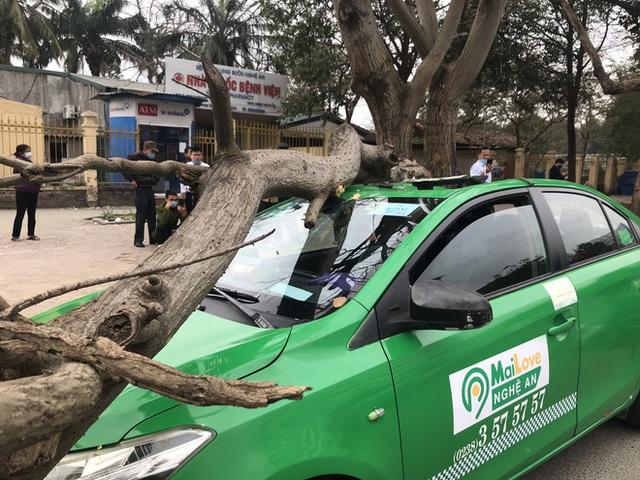 Nam tài xế và khách thoát chết khi vừa ra khỏi cửa thì cây đổ, đè bẹp xe taxi - Ảnh 5.
