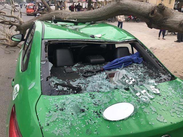 Nam tài xế và khách thoát chết khi vừa ra khỏi cửa thì cây đổ, đè bẹp xe taxi - Ảnh 6.