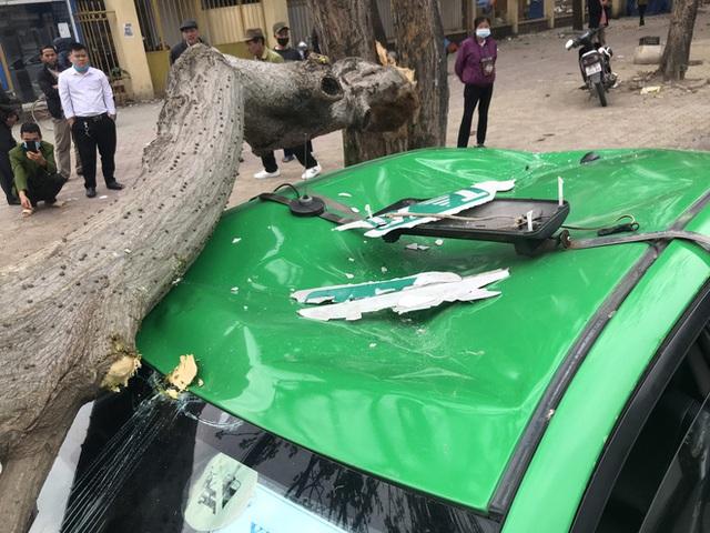 Nam tài xế và khách thoát chết khi vừa ra khỏi cửa thì cây đổ, đè bẹp xe taxi - Ảnh 7.