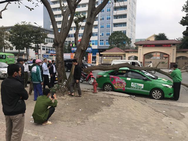 Nam tài xế và khách thoát chết khi vừa ra khỏi cửa thì cây đổ, đè bẹp xe taxi - Ảnh 8.
