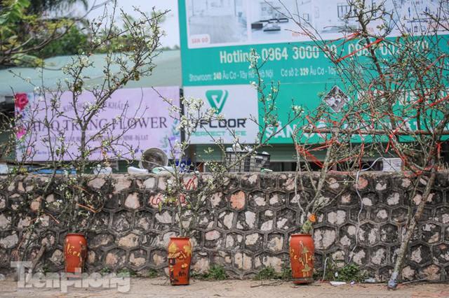 Người dân Hà Thành bỏ tiền triệu mua hoa lê chơi sau Tết - Ảnh 8.