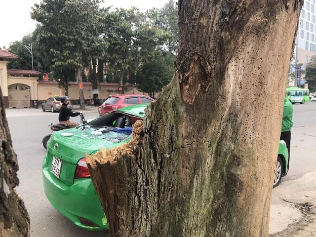 Nam tài xế và khách thoát chết khi vừa ra khỏi cửa thì cây đổ, đè bẹp xe taxi - Ảnh 9.