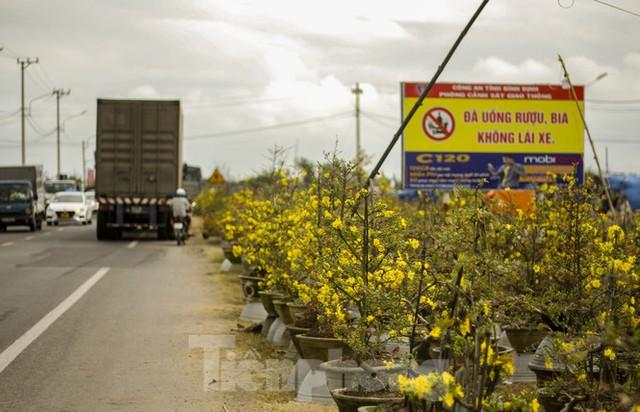 Thủ phủ mai vàng miền Trung doanh thu gần 80 tỉ đồng trong vụ Tết - Ảnh 1.