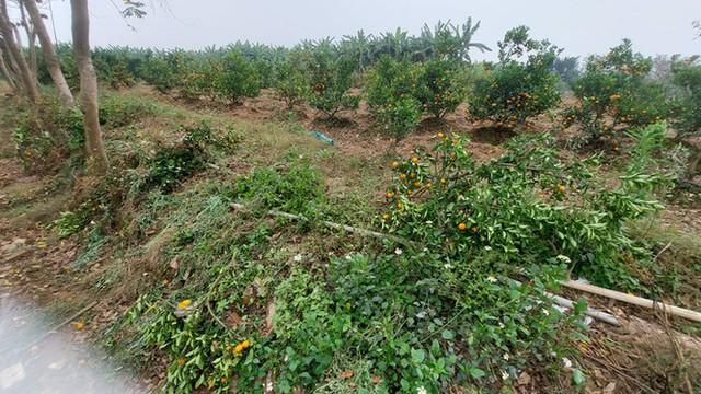 Nỗi đau sau Tết: Cây cảnh ế đầy vườn, nông dân ôm nợ - Ảnh 7.