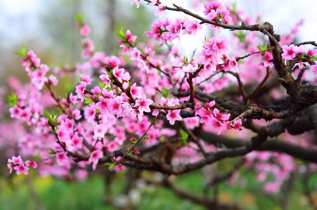 Những loài hoa trưng Tết mang vượng khí rước tài lộc vào nhà - Ảnh 1.