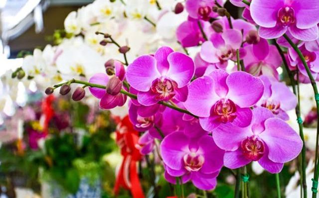 Những loài hoa trưng Tết mang vượng khí rước tài lộc vào nhà - Ảnh 3.