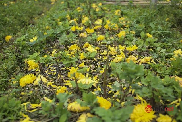 Làng trồng hoa nổi tiếng ở Hà Nội ế ẩm, dân khóc ròng cắt hoa vứt đầy ruộng - Ảnh 13.