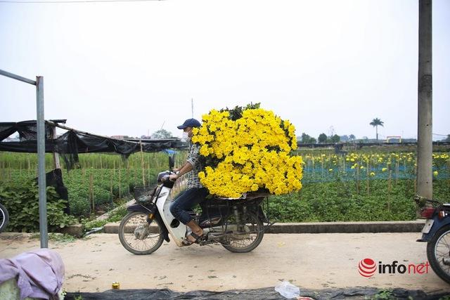Làng trồng hoa nổi tiếng ở Hà Nội ế ẩm, dân khóc ròng cắt hoa vứt đầy ruộng - Ảnh 14.