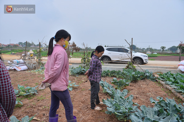 Nước mắt sau Tết: Người nông dân nhổ bỏ cải bắp, su hào vì ế không bán được - Ảnh 15.