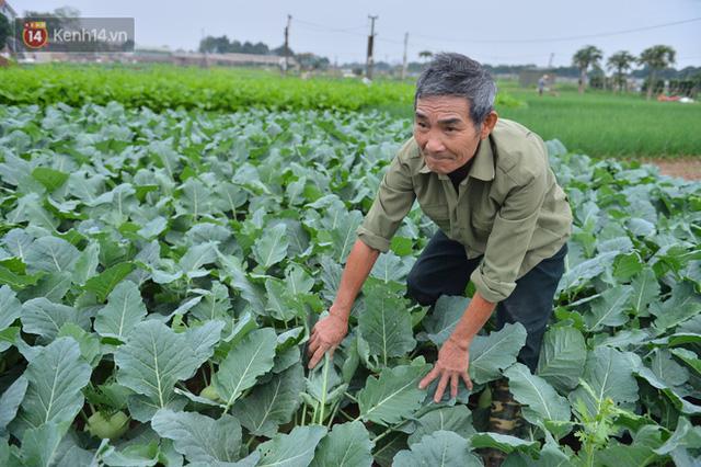 Nước mắt sau Tết: Người nông dân nhổ bỏ cải bắp, su hào vì ế không bán được - Ảnh 3.
