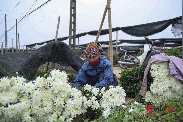 Làng trồng hoa nổi tiếng ở Hà Nội ế ẩm, dân khóc ròng cắt hoa vứt đầy ruộng - Ảnh 3.