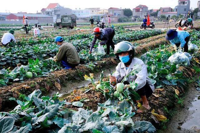 Hải Dương: Thu hoạch nông sản trong vùng phong tỏa COVID-19 - Ảnh 3.