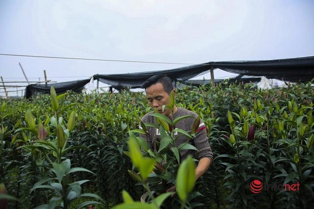 Làng trồng hoa nổi tiếng ở Hà Nội ế ẩm, dân khóc ròng cắt hoa vứt đầy ruộng - Ảnh 4.