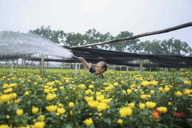 Làng trồng hoa nổi tiếng ở Hà Nội ế ẩm, dân khóc ròng cắt hoa vứt đầy ruộng - Ảnh 5.