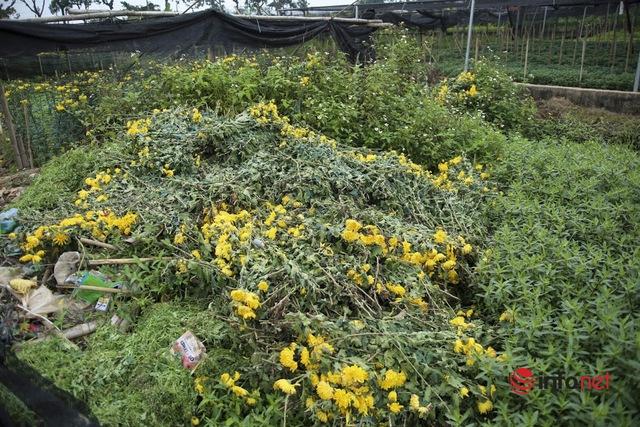 Làng trồng hoa nổi tiếng ở Hà Nội ế ẩm, dân khóc ròng cắt hoa vứt đầy ruộng - Ảnh 8.