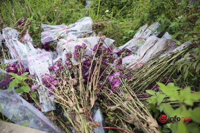 Làng trồng hoa nổi tiếng ở Hà Nội ế ẩm, dân khóc ròng cắt hoa vứt đầy ruộng - Ảnh 9.