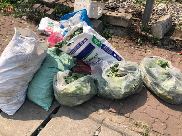 Người Hà Nội đội nắng, nườm nượp đến giải cứu nông sản cho nông dân Hải Dương: 15 tấn rau bán hết veo trong vòng vài tiếng - Ảnh 9.