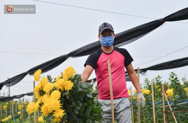 Nông dân Tây Tựu nuốt nước mắt, nhổ hoa vứt bỏ đầy đồng vì ế không bán được - Ảnh 12.