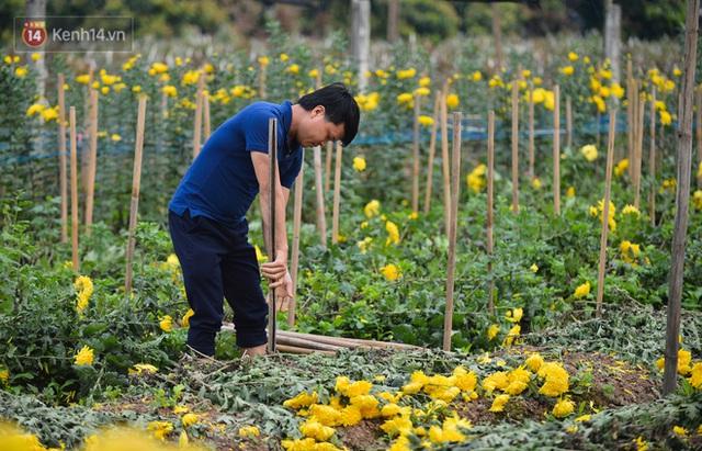 Nông dân Tây Tựu nuốt nước mắt, nhổ hoa vứt bỏ đầy đồng vì ế không bán được - Ảnh 14.
