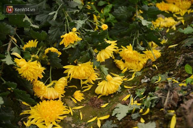 Nông dân Tây Tựu nuốt nước mắt, nhổ hoa vứt bỏ đầy đồng vì ế không bán được - Ảnh 15.