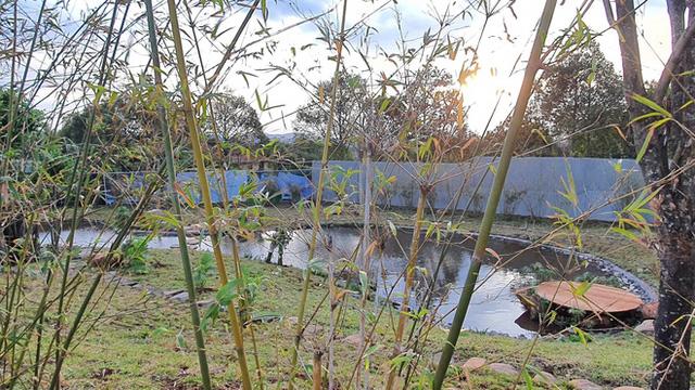 Vườn Zen gần 1ha trong tổ hợp BĐS của ông Đặng Lê Nguyên Vũ vừa khai trương: Xây theo kiến trúc chữa lành Thân – Tâm – Trí, thu vé vào cổng bằng… cây - Ảnh 3.