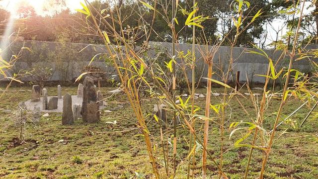 Vườn Zen gần 1ha trong tổ hợp BĐS của ông Đặng Lê Nguyên Vũ vừa khai trương: Xây theo kiến trúc chữa lành Thân – Tâm – Trí, thu vé vào cổng bằng… cây - Ảnh 4.