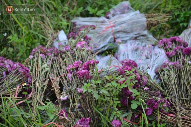 Nông dân Tây Tựu nuốt nước mắt, nhổ hoa vứt bỏ đầy đồng vì ế không bán được - Ảnh 9.