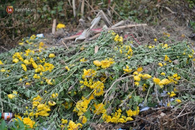 Nông dân Tây Tựu nuốt nước mắt, nhổ hoa vứt bỏ đầy đồng vì ế không bán được - Ảnh 10.