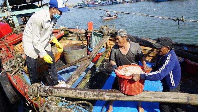 Ngư dân Bình Định kiếm tiền triệu chỉ sau vài giờ ra khơi - Ảnh 1.