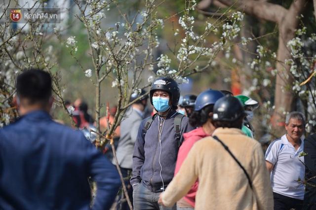 Ảnh: Hàng trăm người dân Hà Nội đổ xô đi mua hoa lê về chơi Rằm tháng Giêng - Ảnh 12.