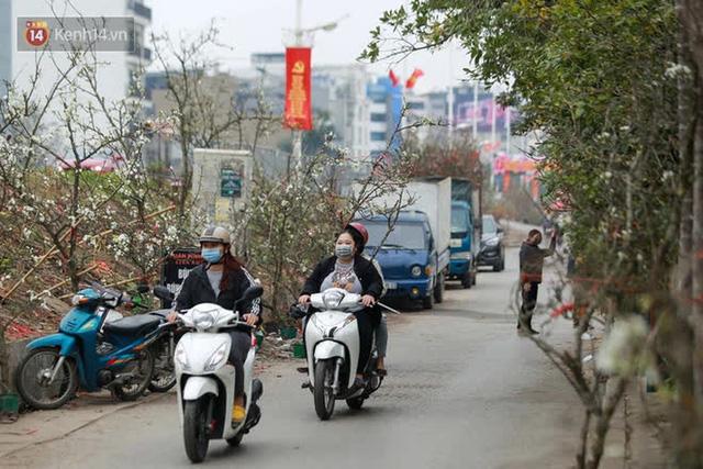 Ảnh: Hàng trăm người dân Hà Nội đổ xô đi mua hoa lê về chơi Rằm tháng Giêng - Ảnh 14.